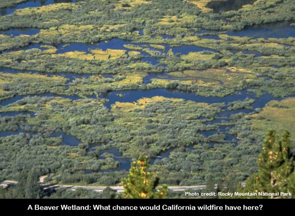 california fire can't stand up to beaver wetland